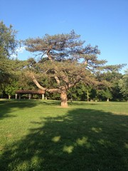 big beautiful tree in the park
