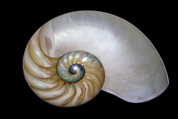 Shell of  Nautilus pompilius isolated on black