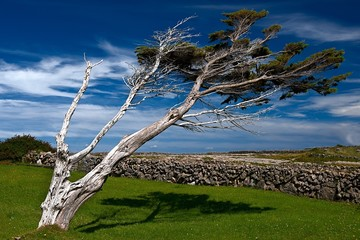 Desolate tree in Irish landscape