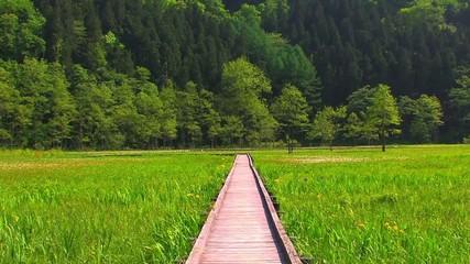 湿地と木道