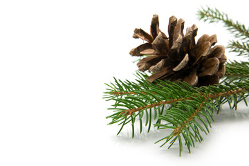 branch of fir-tree and cone