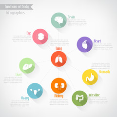 Functions of body infographics, vector eps10