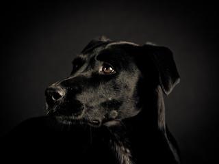 black dog (103)