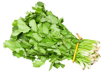 bunch of fresh coriander leaves isolated
