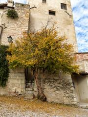 Melograno e torre castello