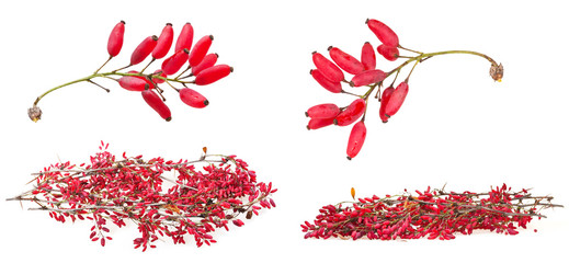 set of red berberis shoot with ripe fruits