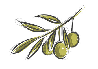 Vector sketch of olive tree branch