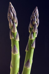 Spargelspitzen, Spargel, gruener, Asparagus officinalis,