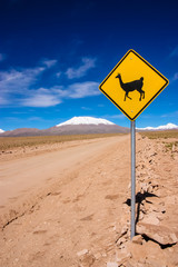 Llama road sign in Bolivia, South America