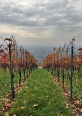 Blick vom Wartberg durch den Weinberg auf Heilbronn