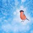 Blue winter background with bird bullfinch. Christmas card with