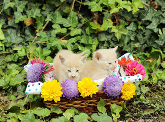 two kittens in wicker basket with flowers