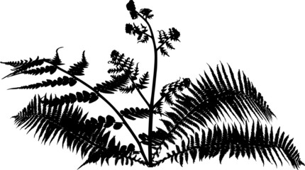 fern bush silhouette isolated on white