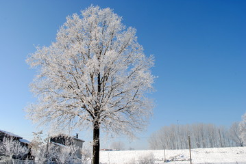 big tree with frozen branches blue sky on background