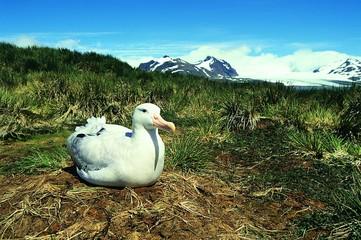 arkticheskaya ptica