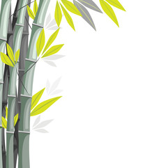 Bamboo with shadows isolated on white background