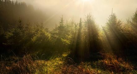 Tannenbäume in verträumter Lichtstimmung