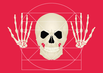 The golden section of the skull on a red background