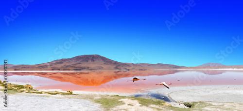 Foto op Aluminium Flamingo Lagoon flamingo bolivia