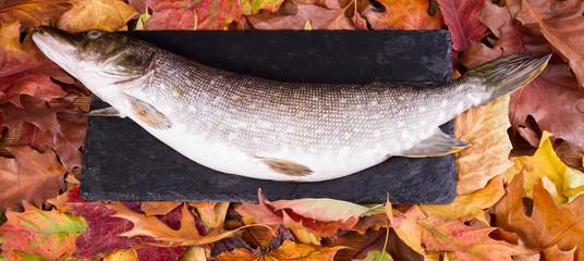 Pike autumn