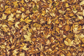 Dry autumn leaves as background