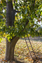 Ladder and tree