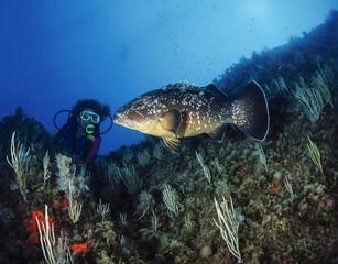 Mediterranean Sea, tunisia, Tabarka, diver and grouper