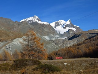 Colorful larch forest and snow capped mountains in Zermatt
