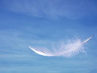 Feather and sky - lightness, softness concept.
