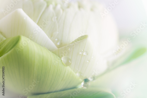 Staande foto Lotusbloem lotus closeup background