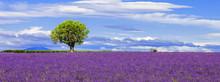 """Постер, картина, фотообои """"Panoramic view of lavender field with tree"""""""