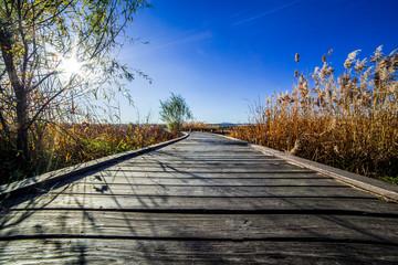 reed wood floor path sky clound