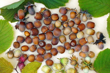 Hazelnuts close-up as background