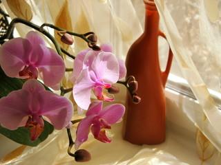 Кувшин и орхидея