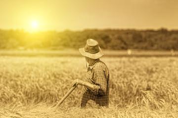 Senior man in field