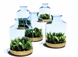 Grass in   jar.