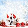 Frohe Weihnachten mit den Osterhasen