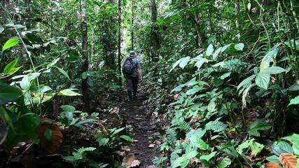 Man in Amazon walks along jungle trail