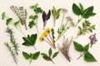 Obrazy na płótnie, fototapety, zdjęcia, fotoobrazy drukowane : Herbal Nature Study