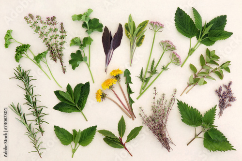 Deurstickers Lavendel Herbal Nature Study