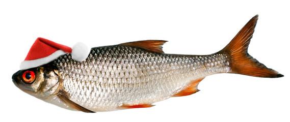 santa hat in fish