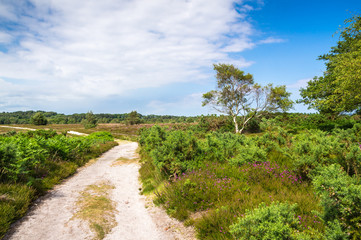 Heathland Track at Arne in Dorset
