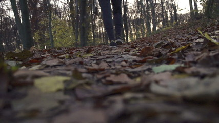 People walking in autumn park, super slow motion, shot at 240fps
