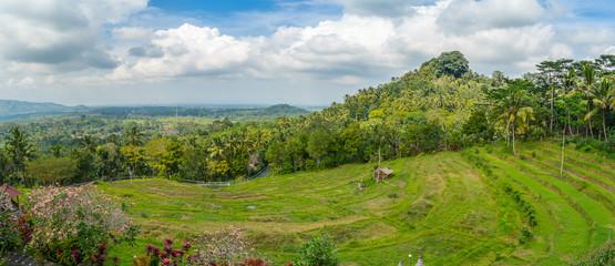 Bali rice terrace panorama