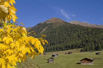 Herbst auf den Tschey Wiesen