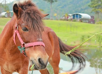The Horse in Thailand Farm in Vacation trip