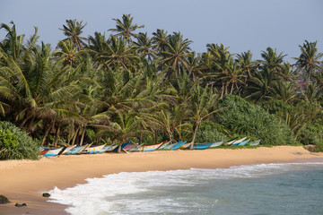 Tropical beach, palm trees and wooden boats in Sri Lanka