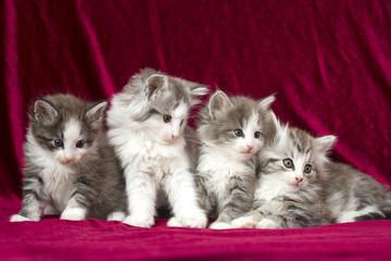 four pretty cats