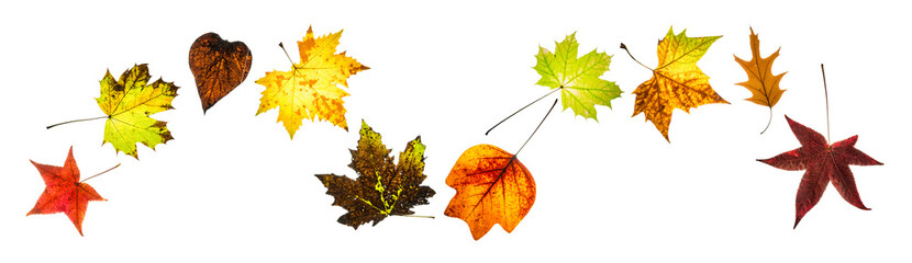 Colorful autumn leaves arranged in wavy line