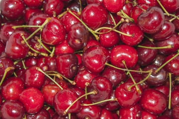 Freshly picked heap of sweet cherries.